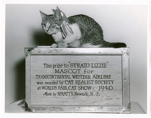 Strato Lizzie, the Mascot Cat of the TWA Pilots at NYCs LaGuardia Airport