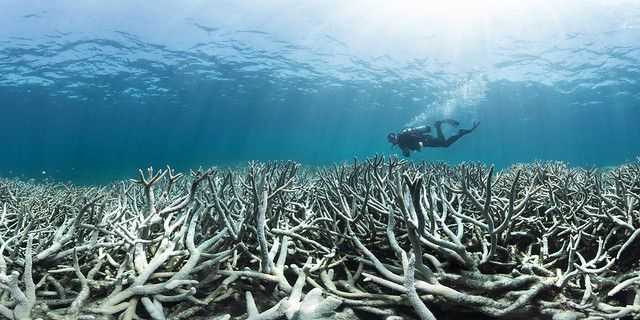 Scientists Feel 'Ecological Grief' Over Great Barrier Reef's Decline