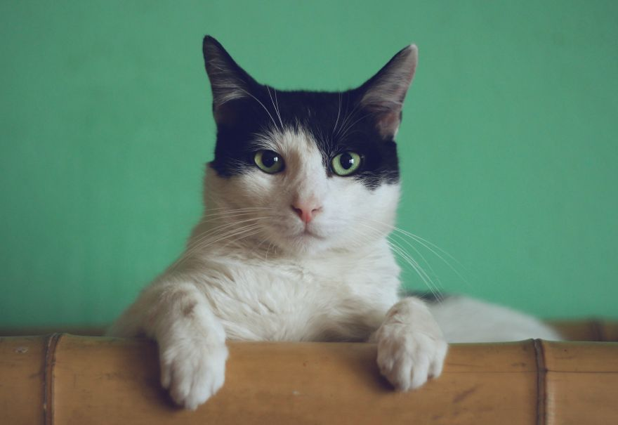 This Cat Sensed Its Owners Breast Cancer Before Doctors!