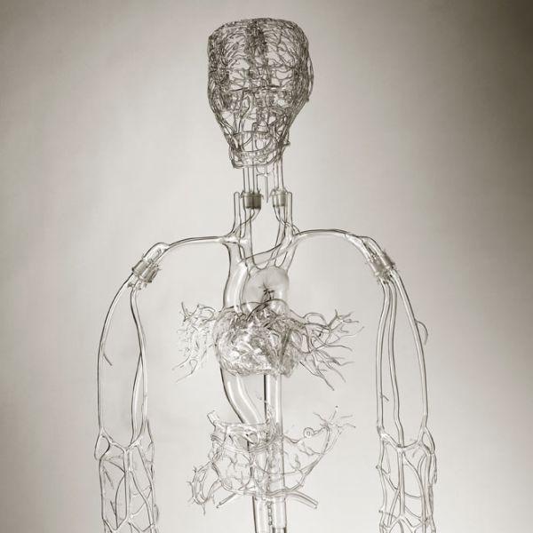 Heart of Glass: The Art of Medical Models - Neatorama