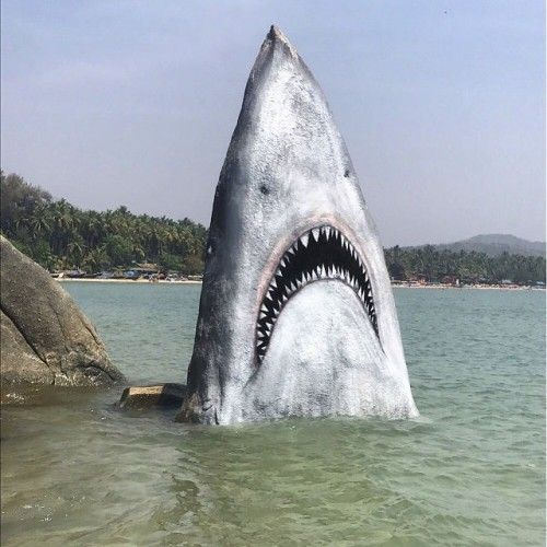 Rock Painted to Look Like Shark