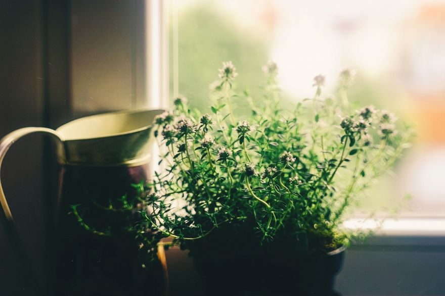 Can Houseplants Purify The Air in Your Home?