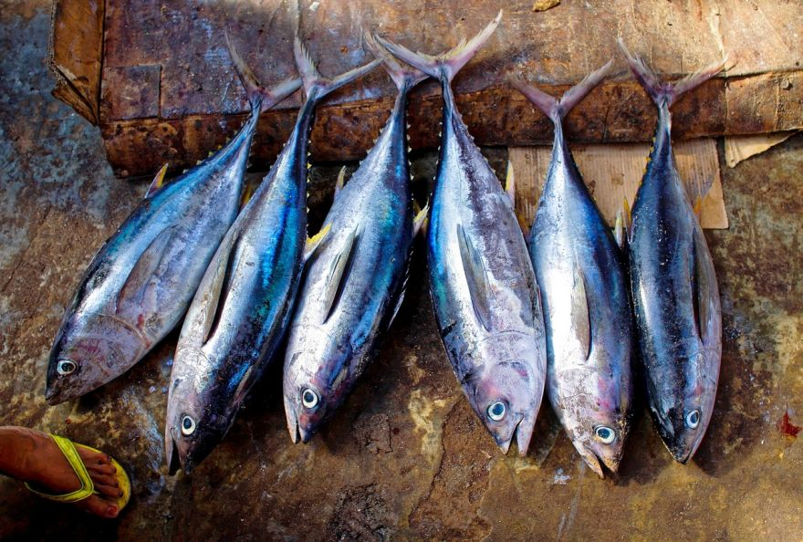 Toxic Mercury Could Accumulate in Seafood Due To Climate Change