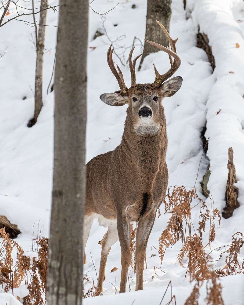 """Man captures """"one in a million"""" deer in photos"""