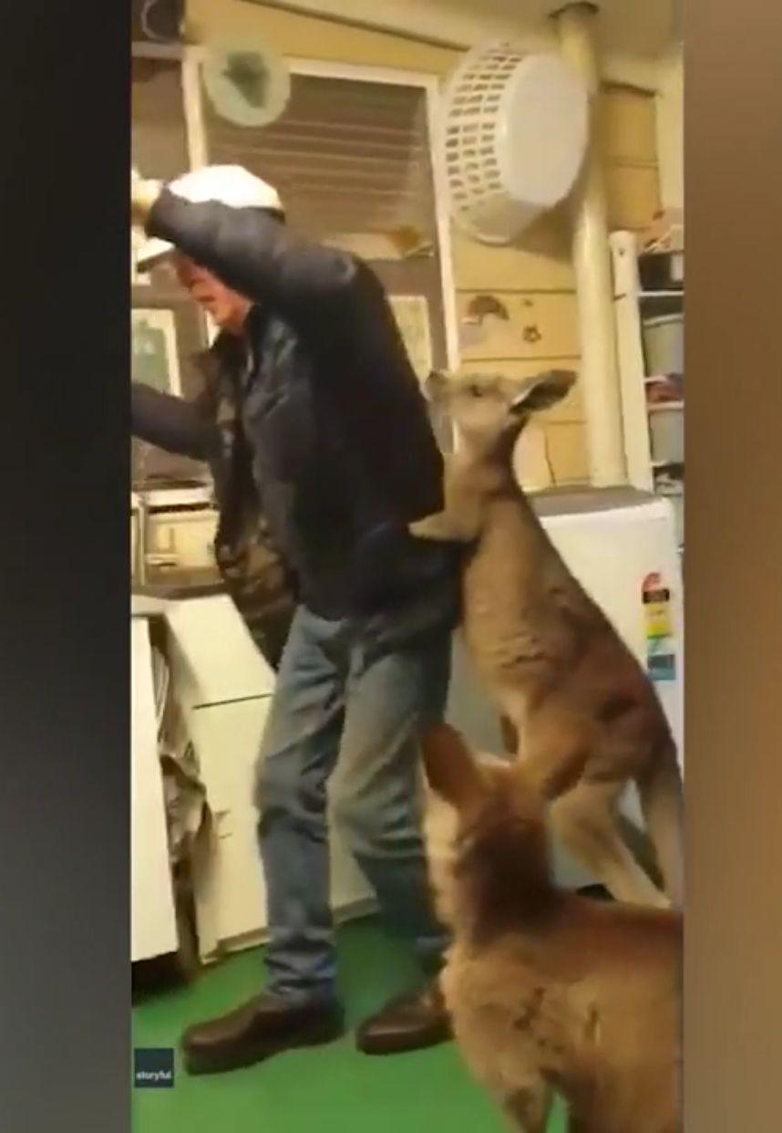 This Kangaroo Has The Moves!