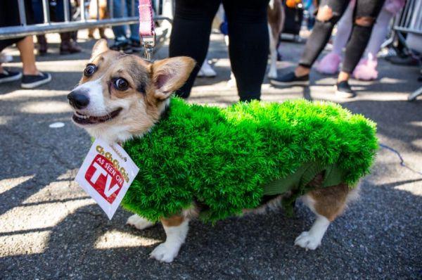 dog costume posts