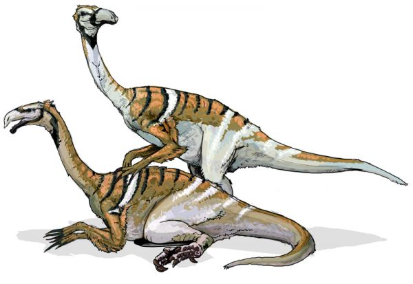 The Mysterious Sex Lives of Dinosaurs