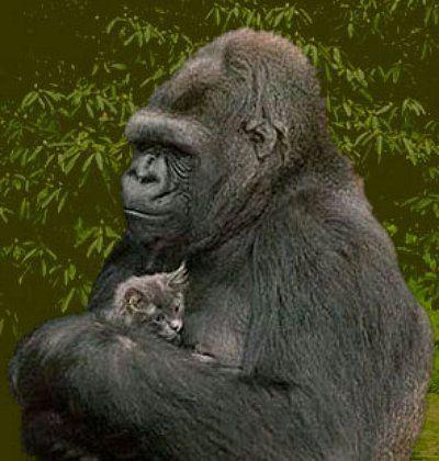 R.I.P. Koko