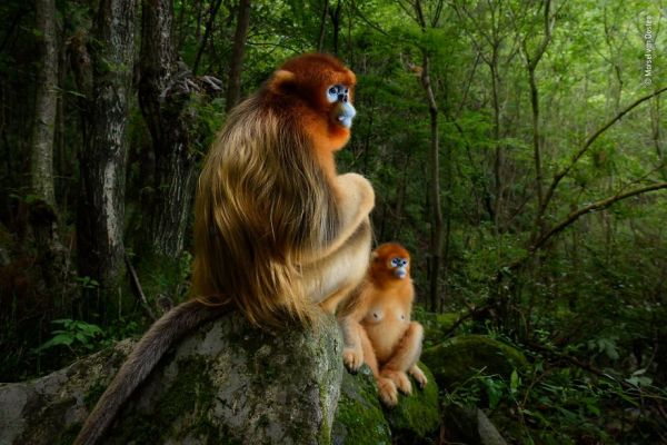 The Wildlife Photographer of the Year Awards 2018