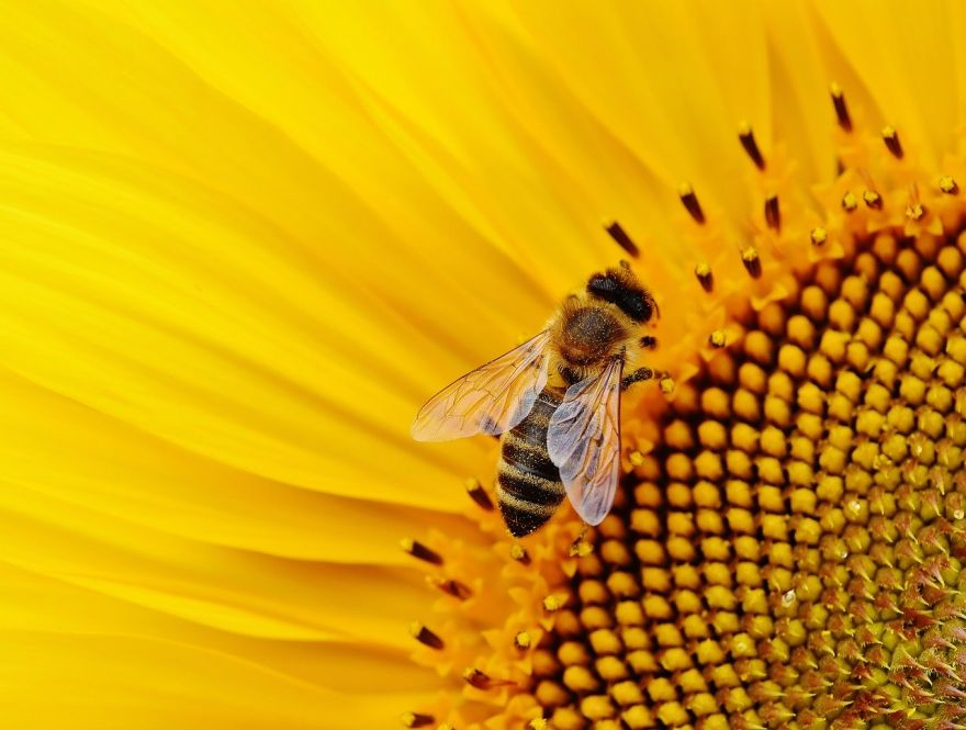 Power Lines and Their Effects on Honeybees
