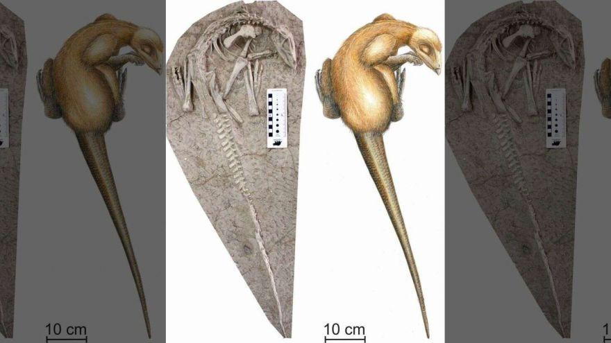 These 125M-Year-Old Dinosaurs Fossils Were Found Perfectly Preserved
